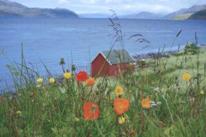 Rotes Fischerhaus am Fjord mit Blumenwiese beim Roadtrip Norwegen