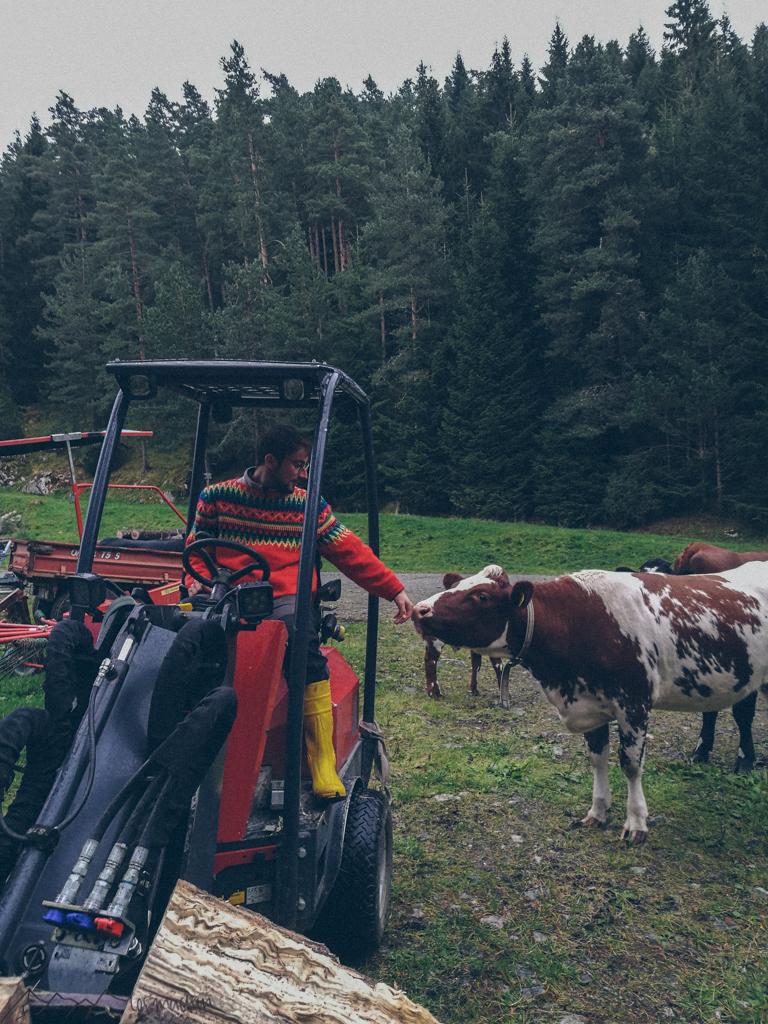WorkandTravel und Vanlife: Praktisches Arbeiten auf dem Bauernhof