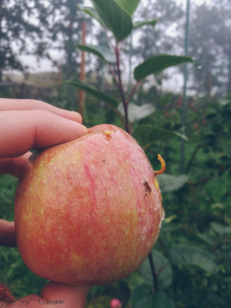 WorkandTravel und Vanlife: Wurm guckt aus Apfel