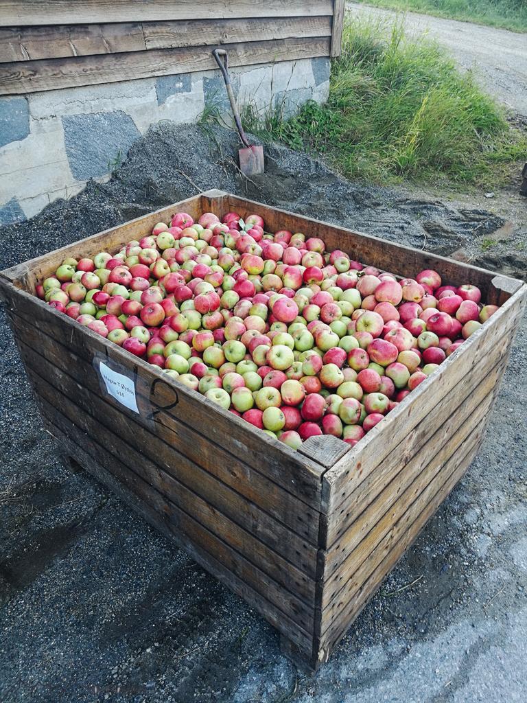 WorkandTravel und Vanlife: Äpfel für den Saft