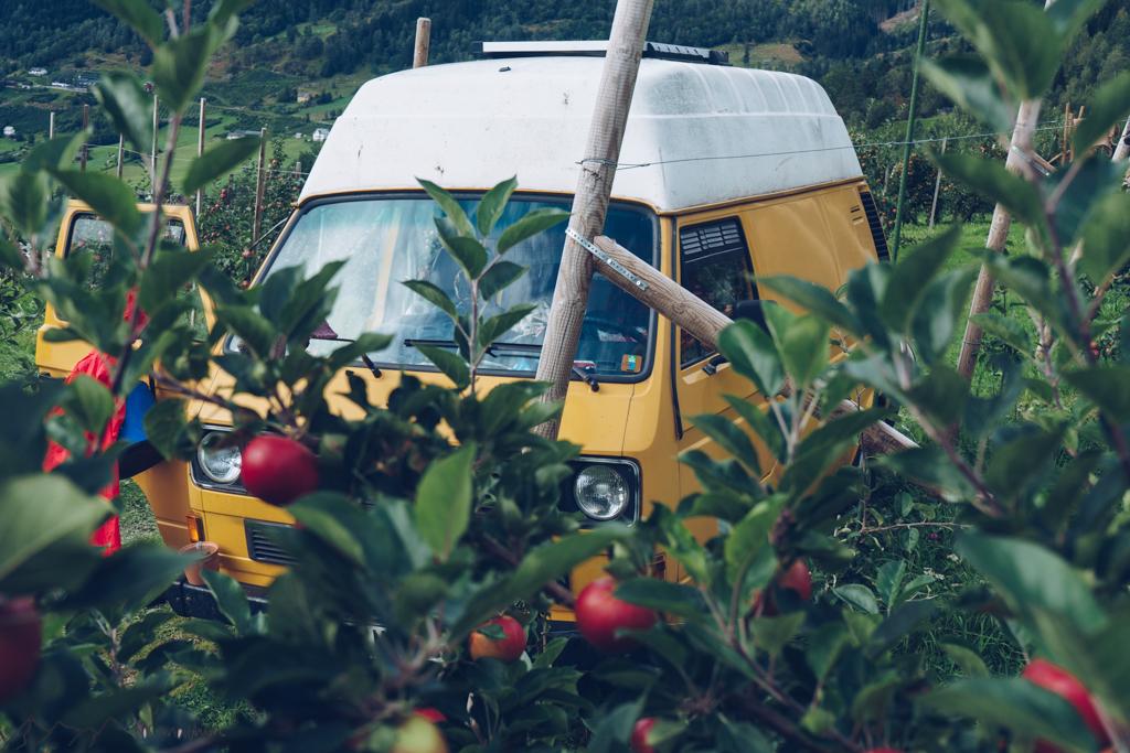 WorkandTravel und Vanlife: Bus in Apfelplantage